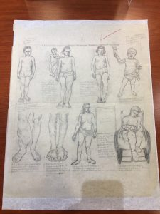 Old anatomical sketches of the human form.